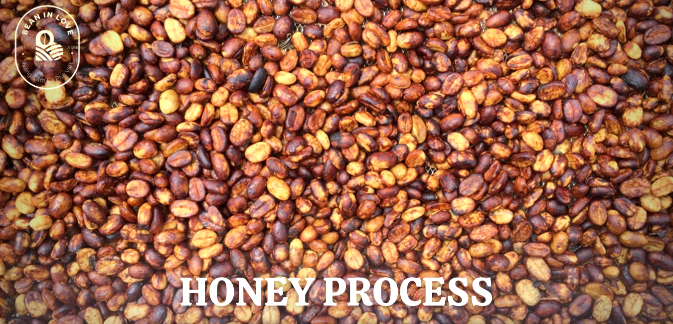 Honey Process