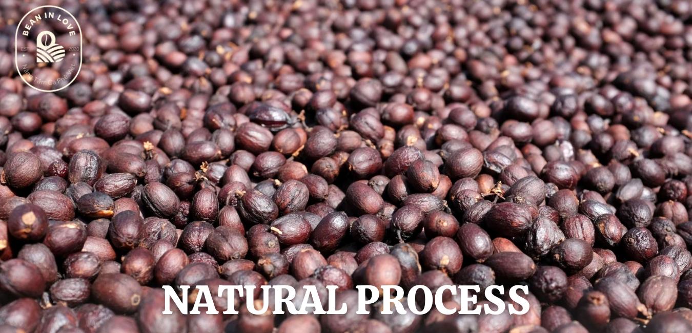 Natural Process