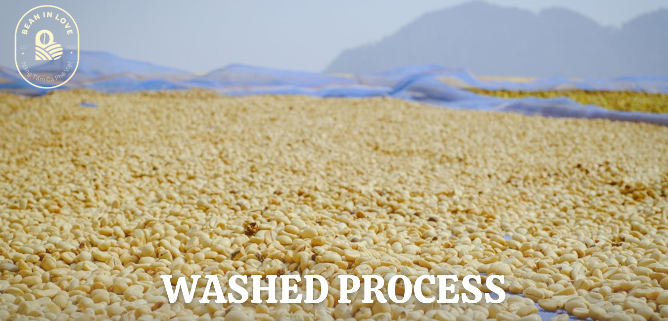 Washed Process